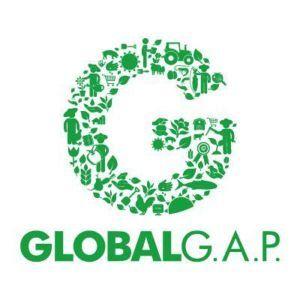 globalg-a-p